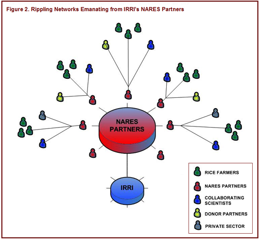 Figure 2: Rippling Networks Emanating from IRRI's NARES Partners