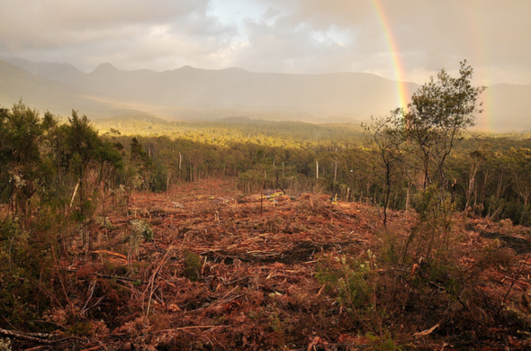 Tasmanian forestry industry and protected native forest co-exist in close proximity
